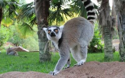 Bioparc – по-домашнему уютный зоопарк в центре Фуэнхиролы