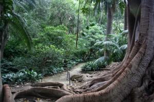 jardin_botanico_malaga
