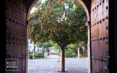 Оранжевые плоды Испании