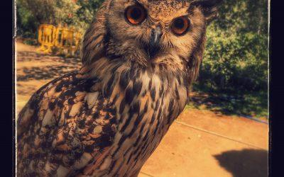 Zoo Castellar – не просто зоопарк, а дом, где вам рады!