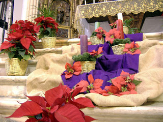 Вифлеемская звезда, Рождественский цветок, flor de Navidad