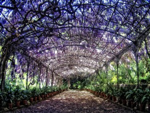 jardin-botanico-de-malaga