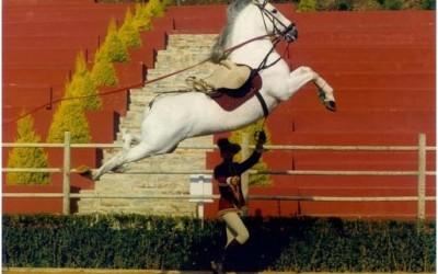 Лошади и музыка