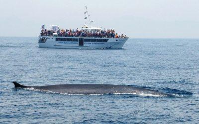 По морям и океанам – дельфины и киты пролива Гибралтар.